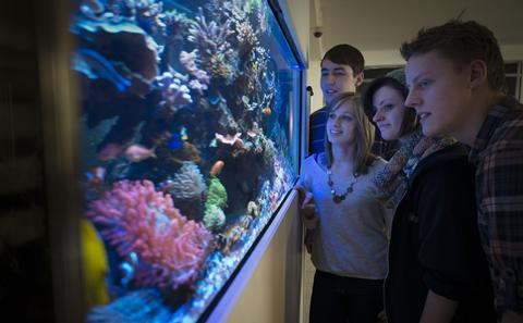 Students looking at an aquarium