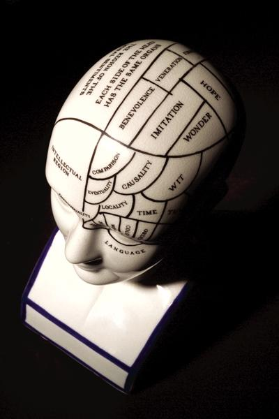 Model mapping regions of the brain