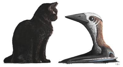 Small-bodied pterosaur compared to domestic cat. Credit: Mark Witton.