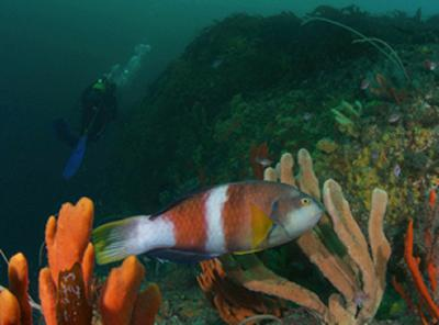 20 years of diving surveys reveal MPAs buffer climate change