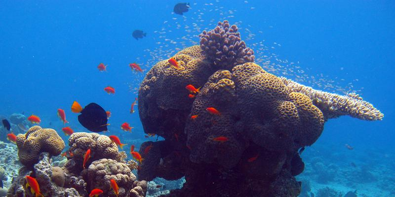 Is marine biology to broad of a topic for a research paper?