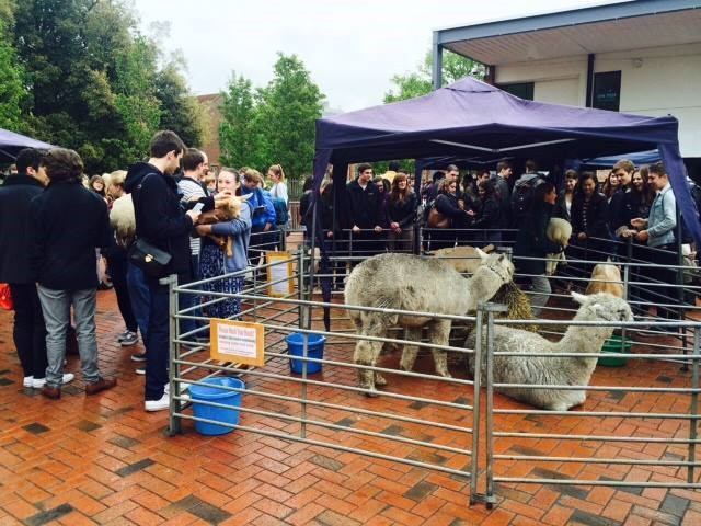 The petting zoo comes to the University of Southampton